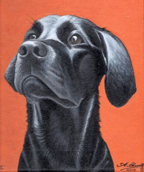 Dog painting 'Flint' by Onionsss