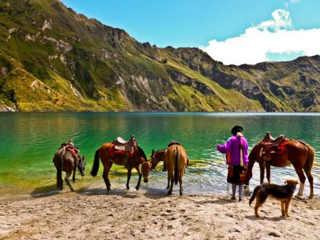 Quilotoa Mules by featherwhitey