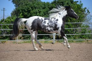 DWP FREE HORSE STOCK 44 by DancesWithPonies
