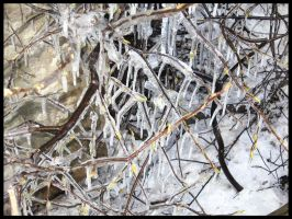 Iced Branches In May by escariel