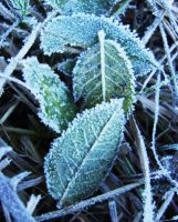 Frozen Leaves by Ellrohir