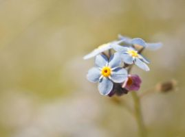 Tiny Flower by ScooterTheDog