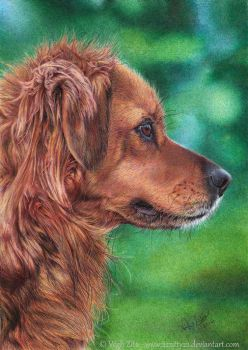 My dog pen drawing by 22Zitty22