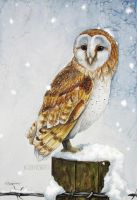 Owl in the silent snow by Kamakru