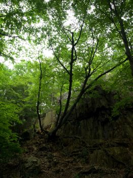Heublein Trail Rock Outcrop by rael9