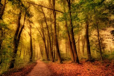 Forest path by tomsumartin
