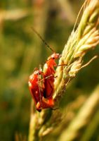 Bugs by grini