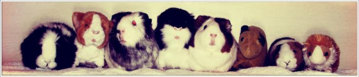Guinea Pig Line Up by II-Art