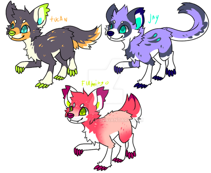 Tropical monster dogs for sale by Pand-ASS