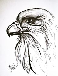 Eagle by luxwar