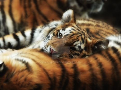 Tiger Cub Resting on Mom by Elle-Arden