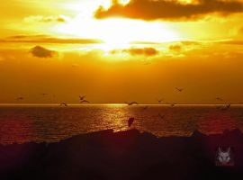 Seagulls And Heron At Sunset by wolfwings1