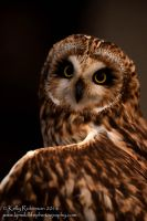 Short Eared Owl Up Close by Shadow-and-Flame-86