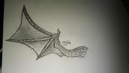 wing of flying lizards  by RNK50