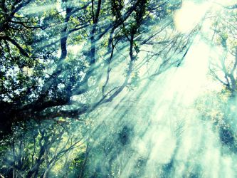 Light rays + trees 2 by AniaBuckle