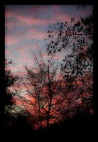 Tree at sunset by Bl4ck-Ice