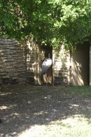 San antonio zoo picture 29 by Inya-spring
