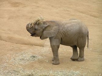 Baby Elephant by Readsway2much
