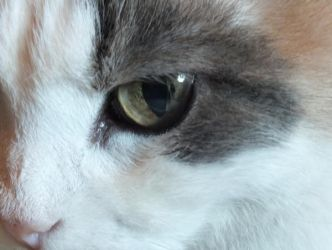 Cats eye by KittyCatHat
