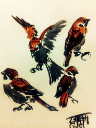Sparrow Practice, sumi ink and watercolor, 2016 by EkashmaDas