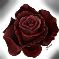 Rose 1.1 by wimpified