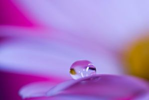 Pink and yellow purple drops by pqphotography