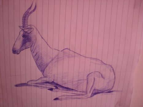 springbok by nadinedavid