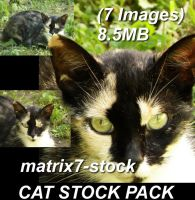 Cat Stock 2 Pack - 7 Images by matrix7-stock