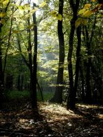 Light Rays In the Wood by LucreciaMortishia