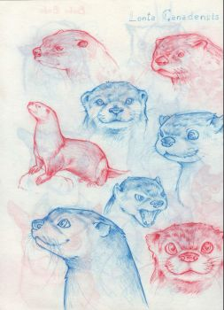 AnOtter animal practise by Kay950