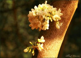 Spring souvenir by ShlomitMessica