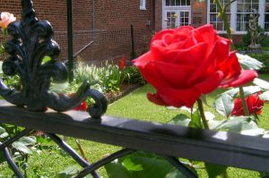 Red Rose Garden by happymouse666