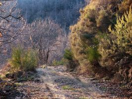 Old road by seianti