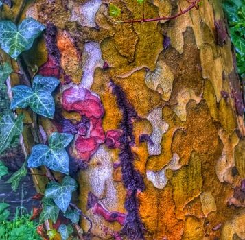 Nature's Puzzle by sethses1