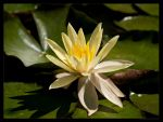 Lilly Flower by FT69