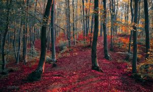 Autumn in the forest V by valiunic