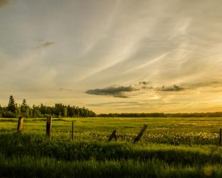 Fields of green and gold by RobertKohler