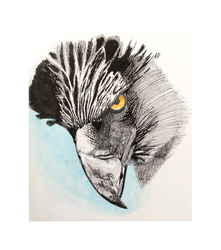 Eagle - Pen and Watercolor by ivycloak97