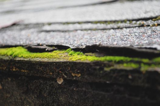 Roof Grass by egnawg