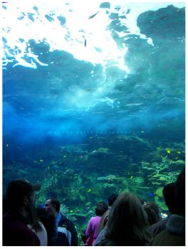 Georgia Aquarium 4 by ShortyMV-Shots