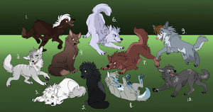 Cheap wolf pup adopts[CLOSED] by SAdoptsS