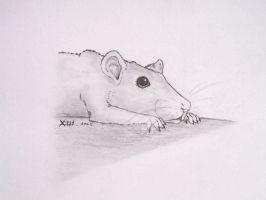 drawing rat again and again... by RachaelXIII