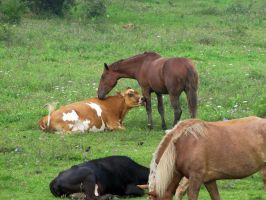 Amish cow and horse friends by Lectrichead