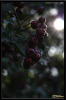 Mood Berries 1 by Xeno834