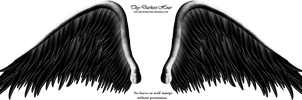 Elegant Black Wing PNG by Thy-Darkest-Hour