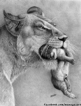 Lioness with a cub by waderra