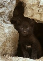 cave cat by icedheartgd