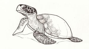 Turtle by jaimeiniesta