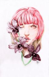 Orchids by dearvalerius
