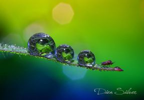 Three dews and one little fly by diensilver